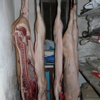 Butchering the pigs