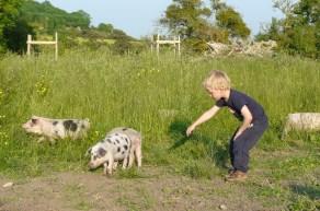 Piglets arrive