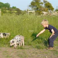 And the pig field was bare
