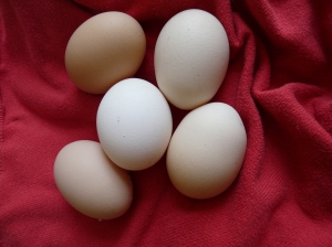 Eggcellent work girls